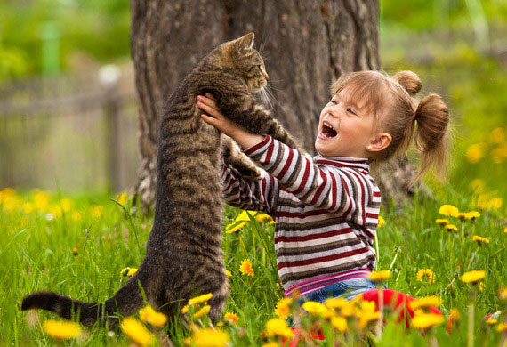 Kačių įdrėskimas